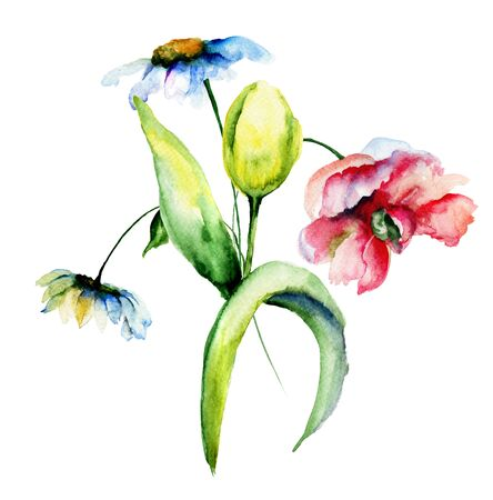 spring flower: Colorful wild flowers, watercolor illustration