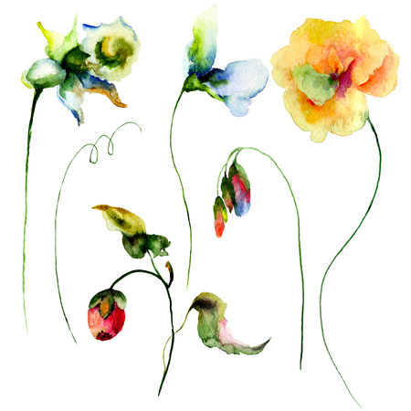 sweet pea: Set of watercolor flowers. Hand drawn floral elements for design