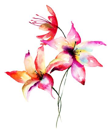 flor de lis: flores del lirio, ejemplo de la acuarela