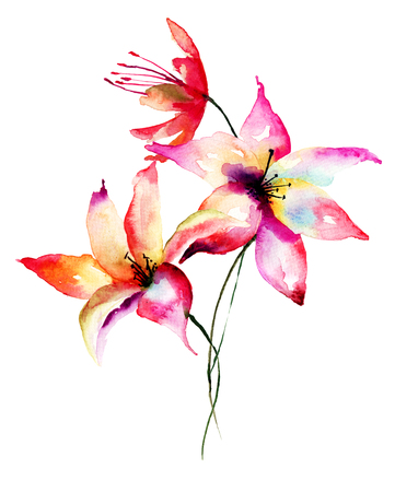 lily flowers: Lily flowers, watercolor illustration