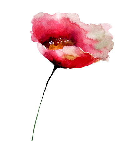 red poppy: Red Poppy flower, watercolor illustration