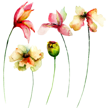 lily: Set of watercolor flowers. Hand drawn floral elements for design.