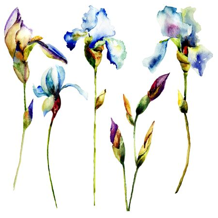 daisy: Set of Iris flowers. Hand drawn floral elements for design