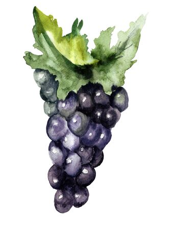 grape cluster: Grape cluster with leaves, watercolor illustration Stock Photo