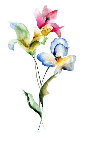 lily flower: Beautiful flowers, watercolor illustration