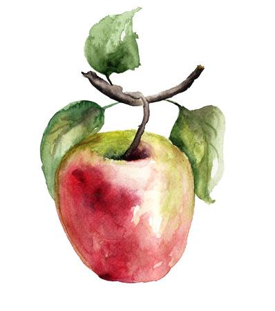 Stylized watercolor apple illustration Stock Photo