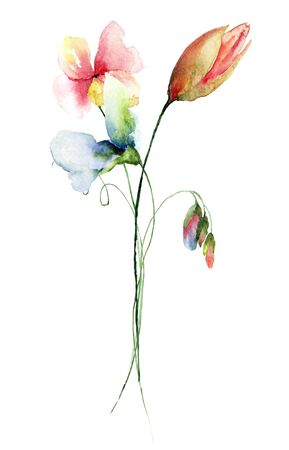 in peas: Original Summer flowers, watercolor illustration Stock Photo