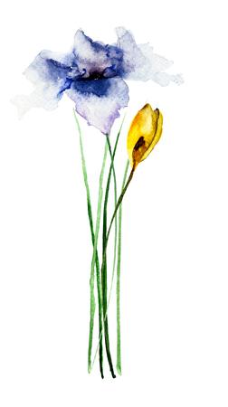 flor de lis: Hermosas flores, ejemplo de la acuarela Foto de archivo