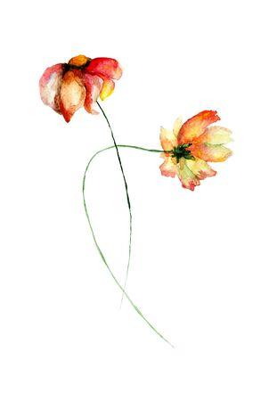gerber daisy: Gerber Daisy flowers watercolor illustration Stock Photo