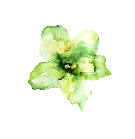 green flower: Green flower, watercolor illustration Stock Photo