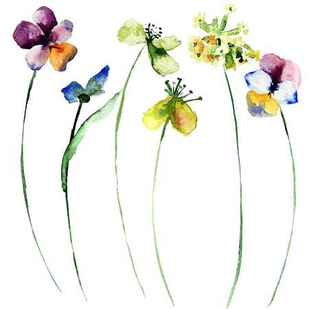 gerber daisy: Set of wild flowers, watercolor illustration