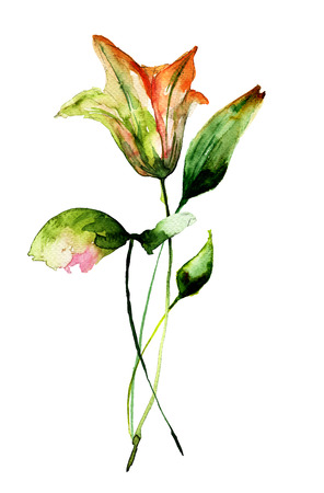 lily flowers: Beautiful Lily flowers, watercolor illustration