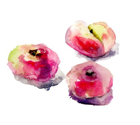 yellow stem: Watercolor illustration of Donut peaches