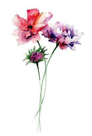 wild flowers: Colorful wild flowers, watercolor illustration