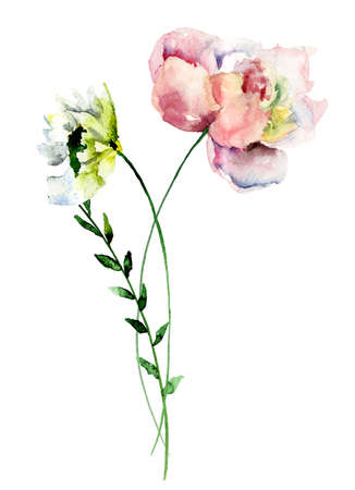 gerber daisy: Stylized Gerber and Peony flowers, watercolor illustration Stock Photo