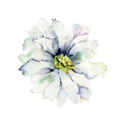 Beautiful Chrysanthemum flower, Watercolor painting Stock Photo
