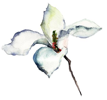 Witte bloemen van de magnolia, aquarel illustratie