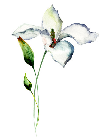 abstract paintings: Beautiful Lily flowers, watercolor illustration