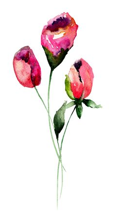 Colorful Roses flowers, watercolor illustration