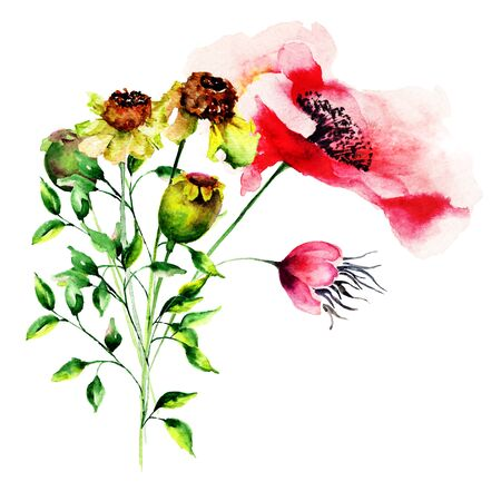 Gerber and Poppy flowers, watercolor illustration Stock Photo
