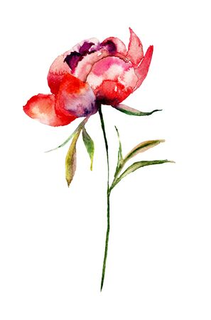 Colorful Peoni flower, watercolor illustration