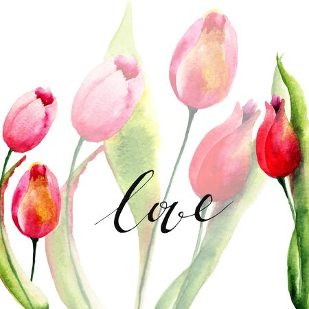 Watercolor illustration of Tulips flowers Stock Photo