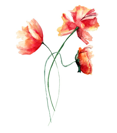 Template for card with with Poppies flowers, watercolour illustration Stock Photo