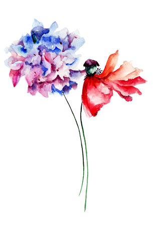 Poppy and Hydrangea flowers, watercolor illustration