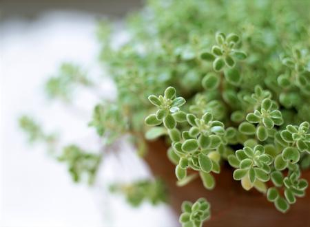 house plant Reklamní fotografie