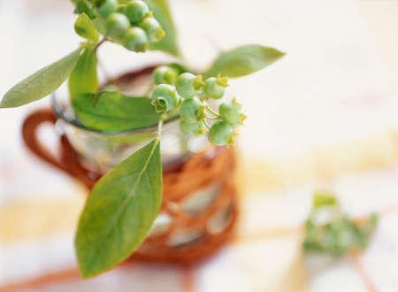 緑のブルーベリー