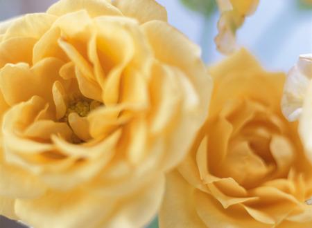 position d amour: roses oranges