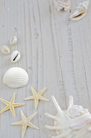 sea shell and starfish on the white board
