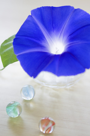 convolvulaceae: blue morning glory and Colorful glass marbles
