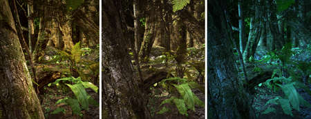 gnarled: 3d CG graphics jungle scene lighting in three variants