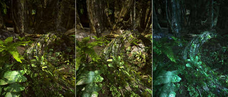 jungle plants: 3d CG graphics jungle scene lighting in three variants