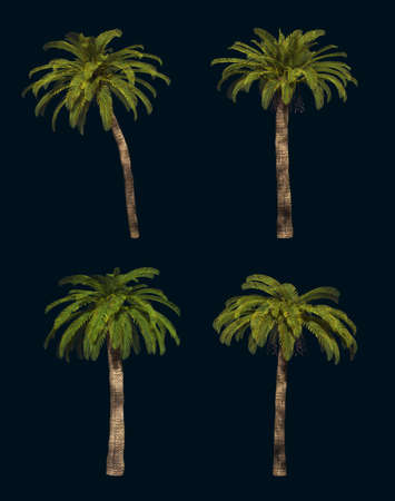 date palm: 3D computer graphics of 4 different isolated palm trees