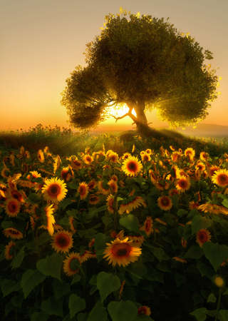 early in the evening: 3D computer graphics of a sunflower field at sunrise Stock Photo
