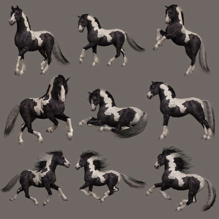 3d computer graphics of nine poses of a Gypsy Vanner horse