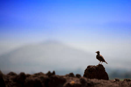 dirt pile: Small bird standing on a pile of dirt Stock Photo