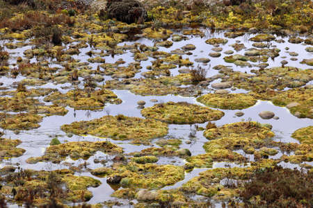 turba: Turbal en 4.500 m de altitud en los Andes ecuatorianos
