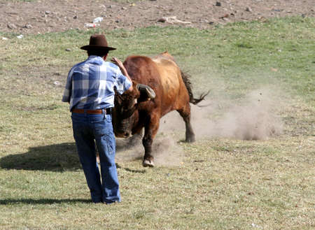 Man being tossed by a bull at an Ecuadorian country bullfight Stock Photo - 4833783
