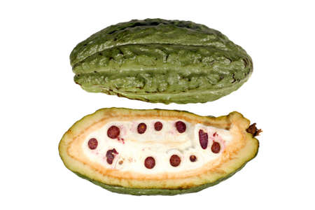 Sectioned cocoa pod showing beans inside
