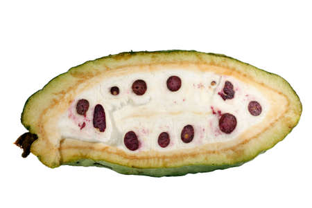 sectioned: Sectioned cocoa pod showing beans inside