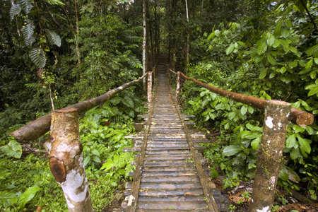 foot bridge: Rustic wooden footbridge in the Amazon rainforest, Ecuador