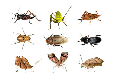 Insects from the Amazon Rainforest