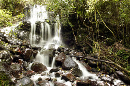 Small waterfall in Andean cloudforest photo