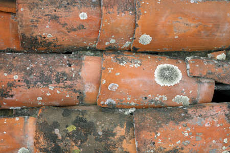 Terra cotta tile roof with crustose lichen colonies