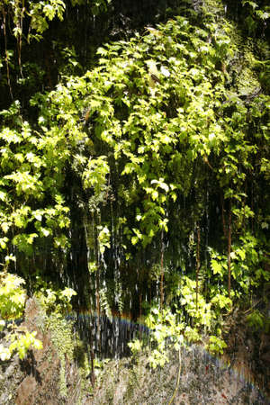 calceolaria: Water trickling through calceolarias in cloudforest with rainbow