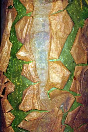 Peeling bark of the Capirona tree (Capirona decorticans) in the Ecuadorian Amazon Stock Photo - 5022306