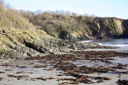 beack: Polridmouth beach, Cornwall, with seaweed